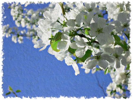 boughs: Imitation of oil painting of blooming boughs of pear-tree on background of blue sky. Image can be used as spring background. Stock Photo