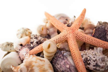 seashell: Natural background of beautiful multicolored seashells with starfish Stock Photo
