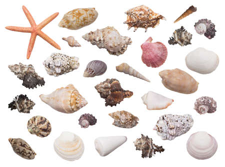 Set of beautiful multicolored seashells with starfish on white background.
