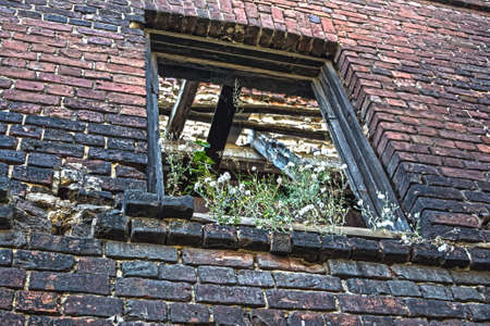 old time: Window opening covered by vegetation in brick wall of shabby building. This building is very old and not inhabited for a long time. Some effects give uniqueness to the picture.