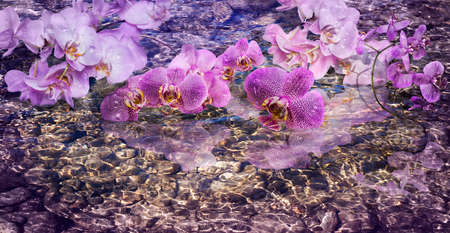 surrealistic: Surrealistic picture of beautiful Phalaenopsis orchid flowers on the surface of shining water. Phalaenopsis orchid flower is like a tropical butterfly.