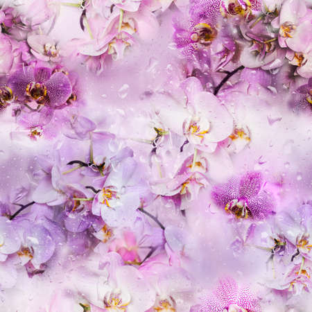 jointless: Seamless texture of orchid flowers and drops of water. Phalaenopsis orchid flower is like a tropical butterfly. Stock Photo