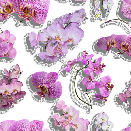 jointless: Seamless texture of pink orchid flowers. Phalaenopsis orchid flower is like a tropical butterfly.