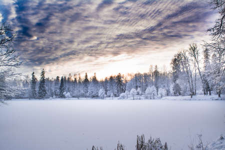 Miracle winter forest covered by snow. Beautiful frozen trees and mysterious sky. Frozen lake. Evening after sunset. Saint-Petersburg. Stock Photo