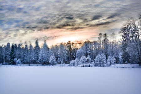 Miracle winter forest covered by snow. Beautiful frozen trees and mysterious sky. Frozen lake. Red sunset. Saint-Petersburg.