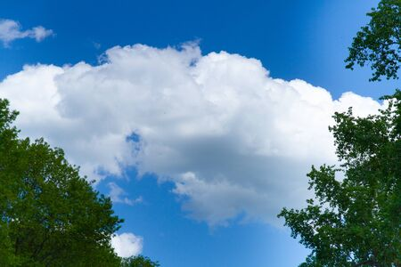 White cloud in the blue sky among the leaves of trees. Zdjęcie Seryjne