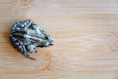 Gray frog sitting on a wooden deck, background.