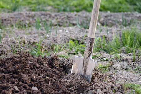 Close up of an old shovel digging the ground at the home garden