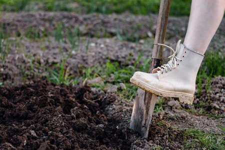 Close up woman digs soil with metal shovel. Digging ground for plant seeding. 스톡 콘텐츠