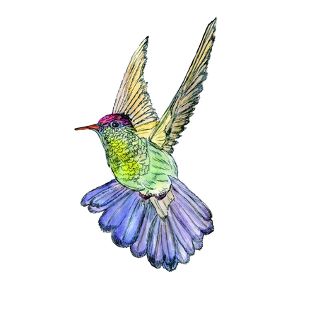 exoticism: Bright colorful bird hummingbird. Vector illustration