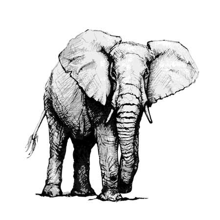 Mano dibuja la ilustración de elefante, aislado sobre fondo blanco. Ilustración vectorial