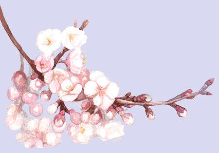 Hand drawn vector watercolor sakura, isolated painted blossom