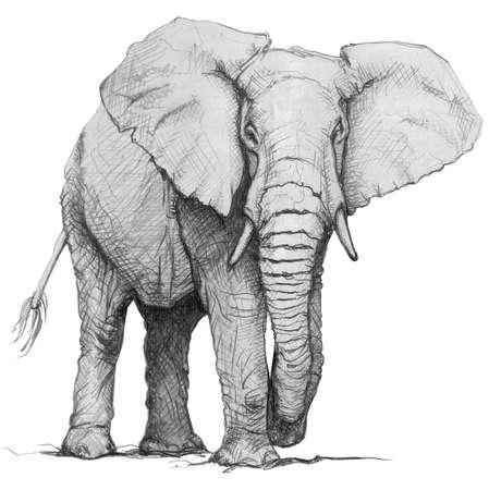 손으로 그린 연필 코끼리의 그림입니다. 흰색 배경에 고립 된 스케치 스톡 콘텐츠