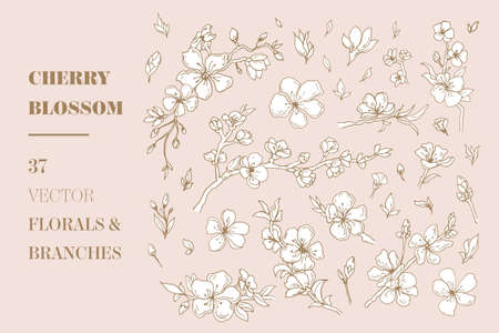 Cherry Blossom vector floral elements Ilustracja