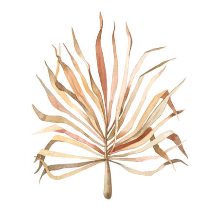 Watercolor dried palm leaf in Boho style
