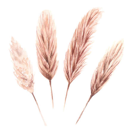 Watercolor dried pampas grass in Boho style Zdjęcie Seryjne