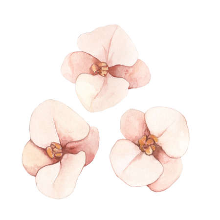 Watercolor hand drawn dried orchids in Boho style Zdjęcie Seryjne
