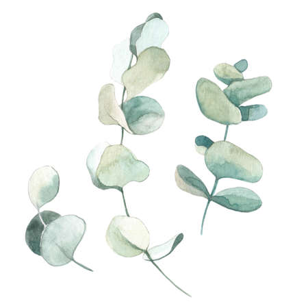Watercolor dried eucalyptus in Boho style