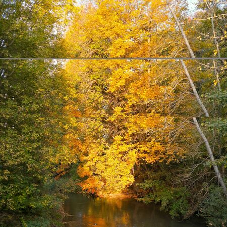 Golden autumn, yellow leaves and river in the forest Banco de Imagens