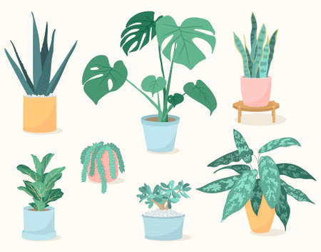 Vector illustration set of trendy house plants in pots. Succulents and leafy plants. Decor for the interior of the house.