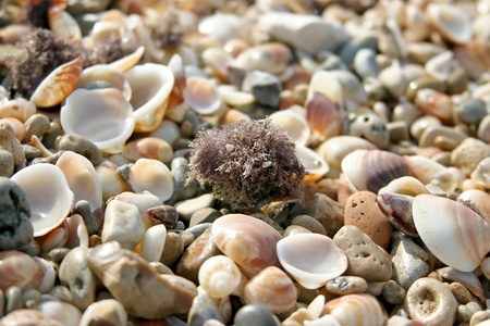land shell: Many shells on background horizontal.
