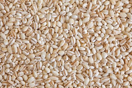 Pearl barley  pearled barley  texture background  Cooked mainly in soups and stews, also as an ingredient for stuffing cooked potages or sweet dishes Stock Photo - 13404013