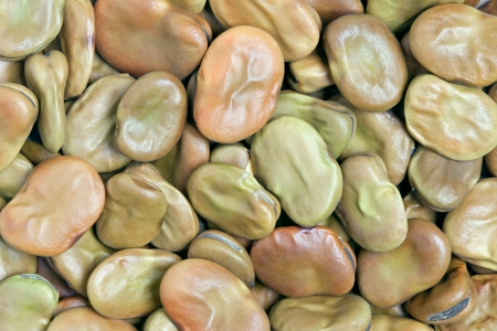 Broad Beans texture background  Also called Fava or Windsor Bean  Huge, substantial beans with a creamy texture; nutty, sweet earthy flavor Stock Photo - 13404065