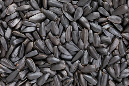 Sunflower seeds  Helianthus annuus  texture, full frame background   Used as garnishes or ingredients in various recipes Stock Photo - 13493013