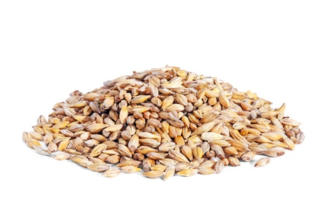 Pile Barley grain  Hordeum  isolated on white background  Barley is a major cereal grain, a member of the grass family  photo