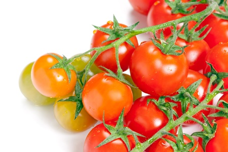 Branch of ripe tomato with drops isolated on white background   Stock Photo - 13553731