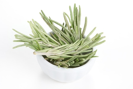 Rosemary  Rosmarinus officinalis  in a white bowl on white background  Used as a spice in cuisines all over the world  The plant is also used in medicine Stock Photo - 13570485