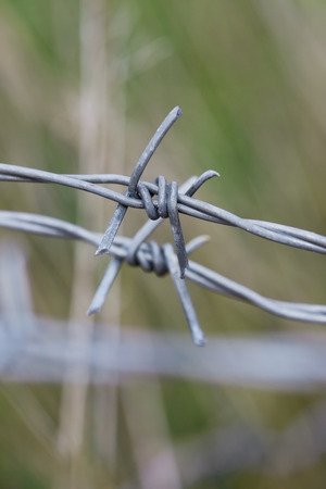 Macro of  barbed wire on a green background photo