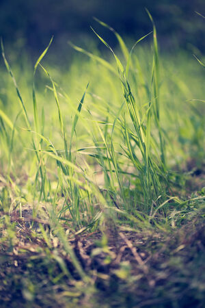 Close up fresh green grass texture background photo
