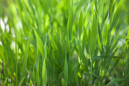 Close up fresh green grass texture background Stock Photo