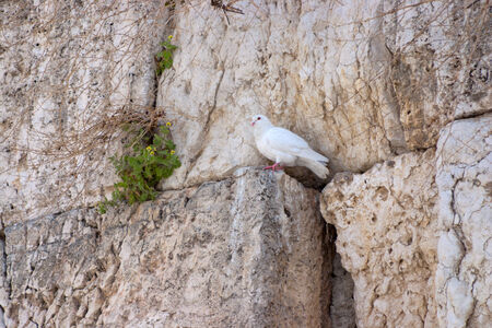Notes at the crack of the Wailing Wall and a sparrow. The Wailing Wall is located in the Old City of Jerusalem at the foot of the western side of the Temple Mount. photo