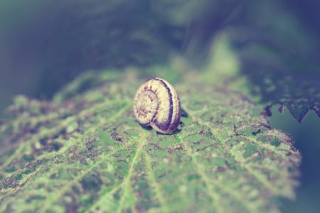 leaf close up: Snail on plant leaf close up green. Vintage style pictures.