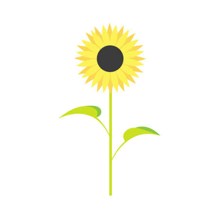 Sunflower with green leaves in a flat style, isolated on white background. Çizim