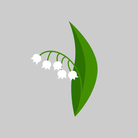 Lily of the valley on gray background. Vector illustration.