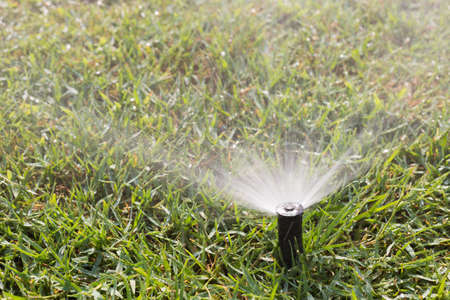 shower head: Sprinkler working on a green grass lawn