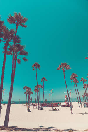 Tripical beach with palm trees. Holiday and vacation concept. California landscape. Vertical, warm toning