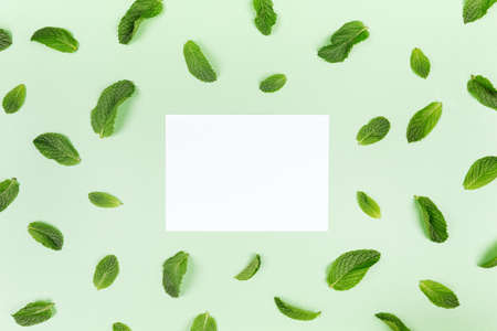 Blank white card and mint leaves random pattern on the trendy solid green backdrop, place for text