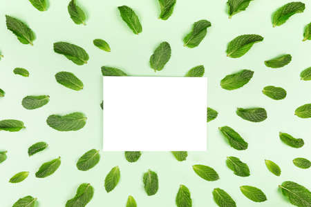 Blank white card and mint leaves pattern on the trendy solid green backdrop, place for text