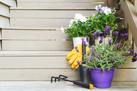 Blossoming violas and lavender with gardening tools at the backyard stairs. Child family gardening concept, horizontal format 版權商用圖片