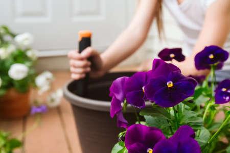 Girl replanting purple viola on the outdoor apartment balcony. Family gardening, greenery concept 版權商用圖片