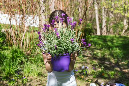Girl with lavender in the pot in the backyard garden. Family gardening spring concept. Horizontal