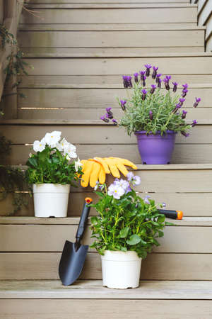 Blossoming violas and lavender with gardening tools at the backyard stairs. Child family gardening concept, vertical format
