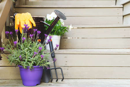 Blossoming violas and lavender with gardening tools at the backyard stairs. Child family gardening concept, horizontal format Banco de Imagens