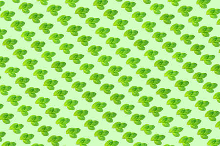 Pattern with mint leaves on the trendy solid green backdrop, ecology concept, Horizontal Standard-Bild