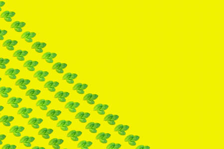 Pattern with mint leaves on the trendy solid yellow backdrop, ecology concept. Horizontal Standard-Bild