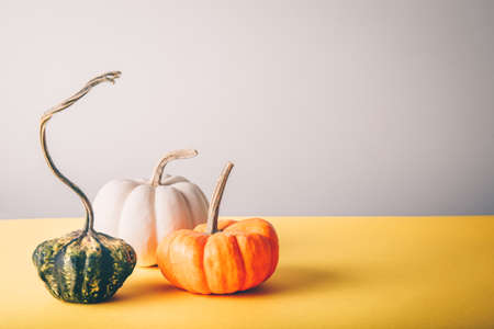 Assorted pumpkins on the grey and yellow drop. Fall coming concept